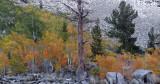 Bishop Creek Canyon Fall Color 4