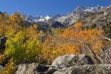 Bishop Creek Canyon Fall Color 5