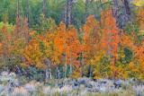 McGee Creek Canyon Fall Color 1