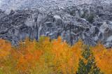 McGee Creek Canyon Fall Color 3