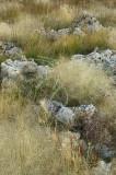Mono Lake - Grasses & Tufa 2