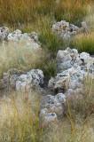 Mono Lake - Grasses & Tufa 3