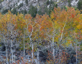 Rock Creek Lake Fall Color