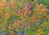 Virginia Lake Canyon Fall Color 1