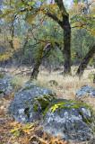 Yosemite NP - Fall Color 1