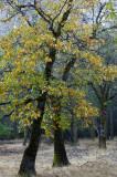 Yosemite NP - Fall Color 2