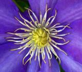 First set of Garden Flowers 2008