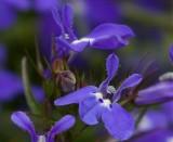 Another set Of Garden Flowers