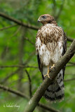 oiseaux_de_proie
