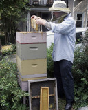 City Beekeeper