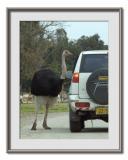 Safari  Ramat  Gan 17.jpg