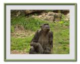 Safari  Ramat  Gan 10.jpg