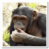 Safari close-up 3.jpg