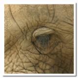 Safari close-up.jpg