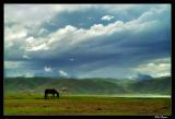 A lone horse, Lijiang area