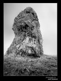 Hawk Stone