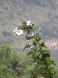 Flowers beside track