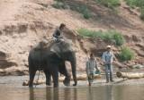 An elephant at work