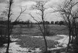 The Wetlands in Winter