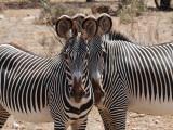 Samburu National Reserve, May 25, 2009