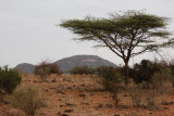 Samburu has semi-arid landscape once you are away from the river