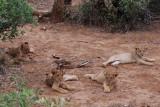There were four cubs, soooo cute!!!
