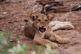 Samburu National Reserve May 26, 2009