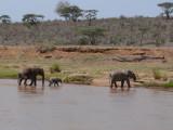 Elephants crossing the Ewaso Nyiro River at Elephant Bedroom