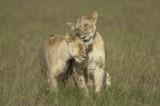 Maasai Mara - Bateleur Camp May 29, 2009