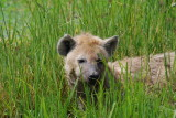 June 3, 2009 Ngorongoro Crater to Lake Manyara (Serena Lodge)