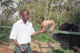 KWS Orphanage - Ostrich & Noah, our KWS guide