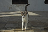 A pretty kitty in front of the museum, not quite Corbin's cat, but cute enough!