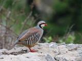 Birds of Lesvos 2008