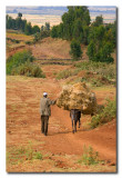 Transporte por el camino