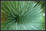 Planta tropical   -   Tropical plant