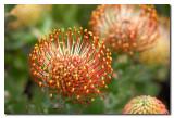 Flor exotica en Longwood Gardens
