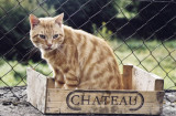 The Chateau Chat