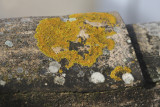 Lichen on the roof tiles...
