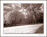 The Garden sepia.jpg
