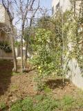My House Mar. 2006 008.jpg