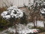 Snow in Amman 30.01.2008 006.jpg