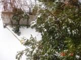 Snow in Amman 30.01.2008 008.jpg