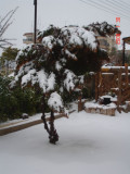 Snow in Amman 30.01.2008 014.jpg