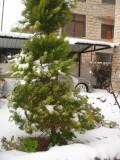 Snow in Amman 30.01.2008 033.jpg