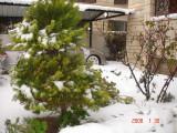 Snow in Amman 30.01.2008 034.jpg