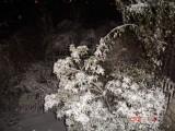 Snow in Amman 30.01.2008 037.jpg