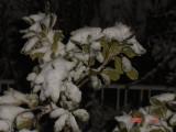 Snow in Amman 30.01.2008 043.jpg