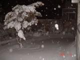 Snow in Amman 30.01.2008 046.jpg