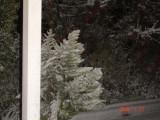 Snow in Amman 30.01.2008 048.jpg