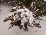 Snow in Amman 30.01.2008 065.jpg